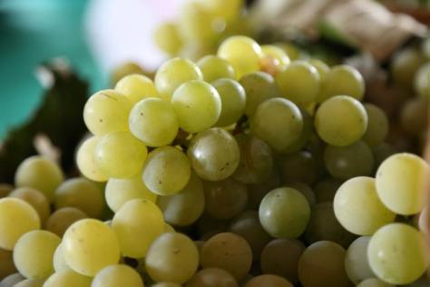 festa da uva 1